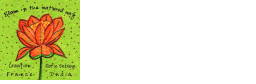 Bloom In The Natural Way Retina Logo